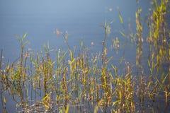 Ochtend op het meer - dalingen van dauw op de bladeren Stock Fotografie