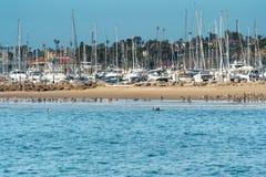 Ochtend in Santa Barbara Harbor Blauwe oceaan en blauwe hemel Troep van Pelikanen en Zeevaartschepen stock afbeeldingen