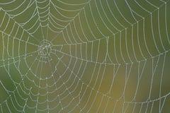 Ochtend spiderweb Royalty-vrije Stock Afbeeldingen