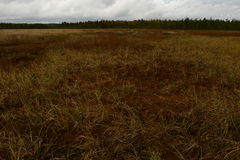 Ochtend van de het moeras donkere herfst van de woestijnbosbouw de moerassige Royalty-vrije Stock Fotografie