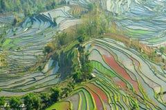 Ochtend van het Terras van de Rijst YuanYang Royalty-vrije Stock Foto