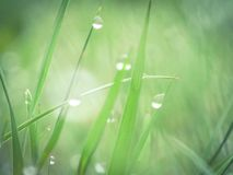 Ochtend verse dauw in het gras Stock Afbeelding