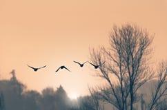 Ochtend vliegende eenden royalty-vrije stock afbeeldingen