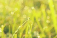 Ochtenddauw op een grassprietje in helder zonlicht Royalty-vrije Stock Fotografie