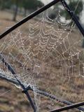 Ochtenddauw op een spiderweb royalty-vrije stock afbeeldingen