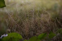 Ochtenddauw op een spinneweb, close-up stock foto's