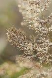 Ochtenddauw op geel gras in de herfst in de ochtend royalty-vrije stock afbeelding