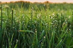 Ochtenddauw op gras onder zonsopgang stock afbeelding