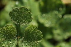 Ochtenddauw op groene bladeren in de herfst stock afbeelding