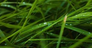 Ochtenddauw op groene gras dichte omhooggaand stock afbeeldingen