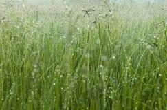 Ochtenddauw op het gras Stock Afbeelding