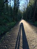 Ochtendgang in het bos Royalty-vrije Stock Foto's