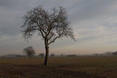 Ochtendlandschap met gebieden en bomen in mist royalty-vrije stock afbeelding