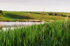 Ochtendlandschap met nevelig meer en vogel op gras royalty-vrije stock fotografie