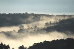 Ochtendlicht door het regenwoud met dikke mist wordt geschilderd die stock foto's