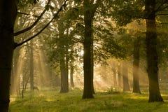 Ochtendlicht met bomen royalty-vrije stock afbeeldingen