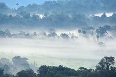 Ochtendmist in dicht tropisch regenwoud bij het nationale park van Khao Yai royalty-vrije stock afbeelding