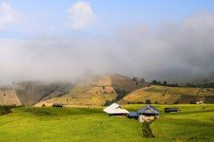 Ochtendmist en rijst in Thailand royalty-vrije stock afbeelding