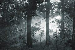 Ochtendmist in het bos Royalty-vrije Stock Foto