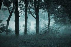 Ochtendmist in het bos Royalty-vrije Stock Foto's