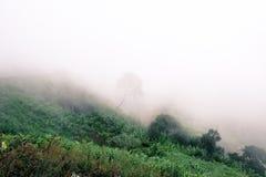 Ochtendmist op de bergen Stock Foto