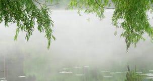 Ochtendmist op de rivier stock video