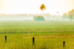 Ochtendmist op het gebied in tropisch royalty-vrije stock fotografie