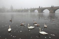 Ochtendmist over Charles Bridge in Praag Stock Foto's