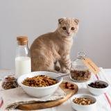 Ochtendontbijt met kat Granola met rozijnen, Amerikaanse veenbessen en hazelnoten diende met amandelmelk op een witte linnenachte stock foto