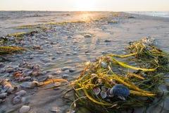 Ochtendstrand met zeewier en zeeschelpen royalty-vrije stock foto's
