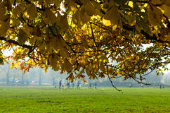 Ochtendvoetbal of voetbalpraktijk in Hyde Park, Londen Stock Foto's