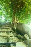 Ochtendzon, die door de bomen, een wegbos glanzen Stock Foto