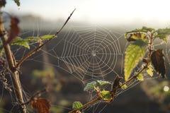Ochtendzonsopgang spiderweb Stock Foto