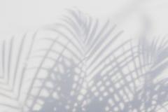 ocienia palmowego liść na białej ścianie Fotografia Royalty Free