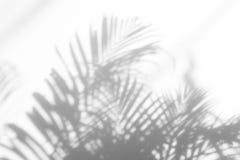 ocienia palmowego liść na białej ścianie Zdjęcie Stock