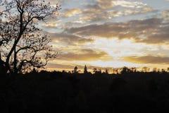 Ocienia sylwetkę pogodny ciepły zmierzch przez lasowych drzew Zdjęcia Royalty Free