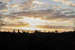Ocienia sylwetkę pogodny ciepły zmierzch przez lasowych drzew Zdjęcie Royalty Free
