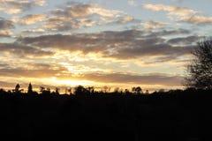 Ocienia sylwetkę pogodny ciepły zmierzch przez lasowych drzew Zdjęcia Stock