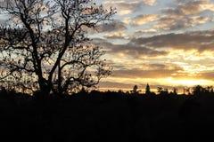 Ocienia sylwetkę pogodny ciepły zmierzch przez lasowych drzew Obraz Royalty Free