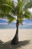 Ocieniony drzewko palmowe na tropikalnej piaskowatej plaży. Aitutaki Fotografia Royalty Free