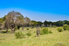 Ocieniony i zielony teren Fotografia Stock