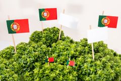 Ocimum minimum plant. Over a white wooden background and a portuguese flags Royalty Free Stock Photography