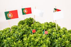 Ocimum minimum plant. Over a white wooden background and a portuguese flags Stock Photo
