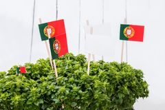 Ocimum minimum plants. Over a white wooden background and a portuguese flags Stock Photos