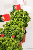 Ocimum minimum plants. Over a white wooden background and a portuguese flags Stock Image