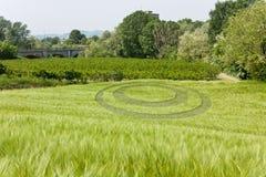 Ocircle de blé Photographie stock