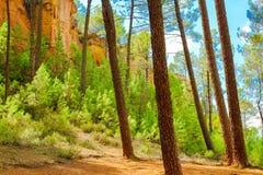 Ockerhaltige Ablagerung Roussillon: Wald von schrägen Kiefern in der Schlucht mit der roten Erde stockbild