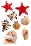 Сockleshells and starfish Stock Photos