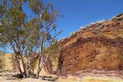Ockragropar runt om Australien campfireliten vik görar till kung kamratskap det gjorda nya nordliga stationsterritoriet Royaltyfri Fotografi