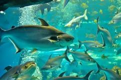 oCloseup of beautiful Sea Fish Royalty Free Stock Photography
